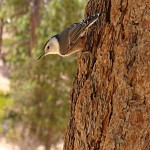bryce_canyon_vogel