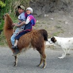 kids_riding_an_alpaca