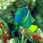 tropical_reef_fish3