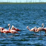 18-old-friends_flamingos