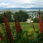33-camping-in-ushuaia