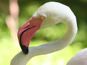 04-bird-park_flamingo