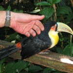 05-bird-park_stefan-is-petting-a-tucan
