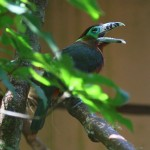 12-bird-park_there-are-so-many-different-tucans