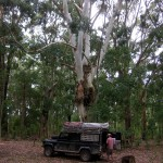 03_fort-theresa-camping-under-big-trees